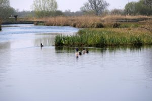 Cruising the canals of Giehoorn