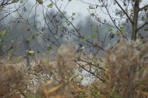Herfst Giethoorn