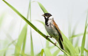 Vogels spotten op de Wieden