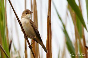 Kom vogels spotten in de Weerribben
